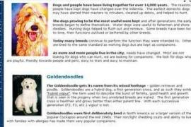 GOLDENDOODLES|金毛网:goldendoodles.com