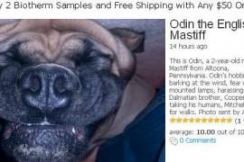 UPSIDE DOWN DOGS 颠倒的狗: upsidedowndogs.com