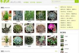 DuoRouYou:多肉植物鉴赏网:www.duorouyou.com
